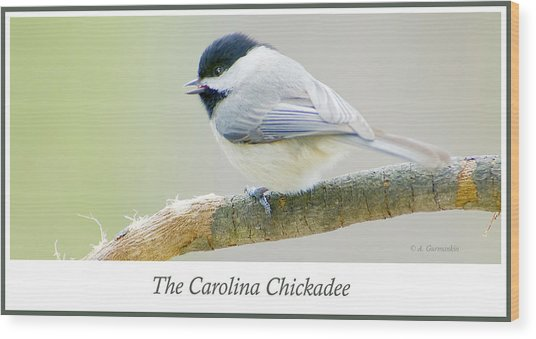 Carolina Chickadee, Animal Portrait Wood Print