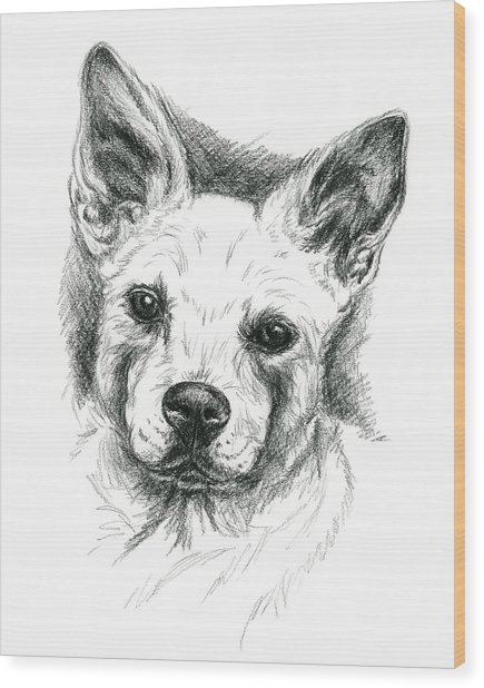 Carolina Dog Charcoal Portrait Wood Print
