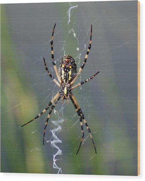 Carolina Garden Spider Wood Print