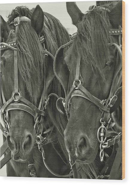 Paired Carriage Ponies Wood Print by JAMART Photography
