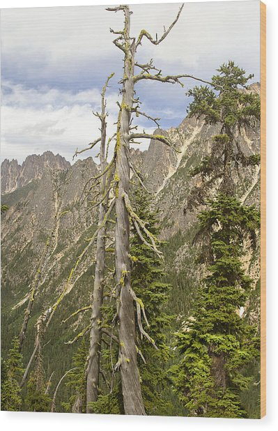 Cascades Tree Wood Print