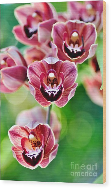 Cascading Miniature Orchids Wood Print