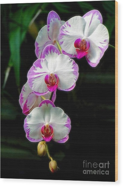 Cascading Orchid Beauties Wood Print