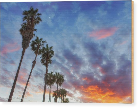 Casitas Palms Wood Print