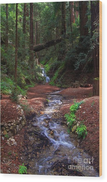Castro Canyon In Big Sur Wood Print