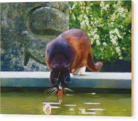 Cat Drinking In Picturesque Garden Wood Print by Menega Sabidussi