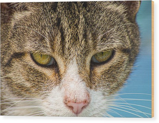 Wood Print featuring the photograph Cat Eyes by Willard Killough III