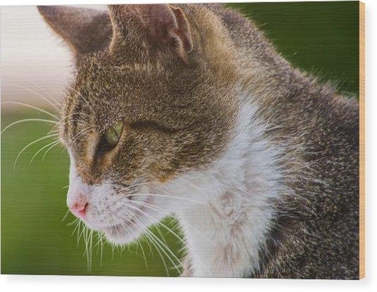 Cat Hunting Wood Print