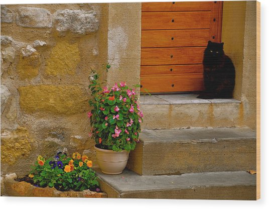 Cat In Capestang France Wood Print by K C Lynch