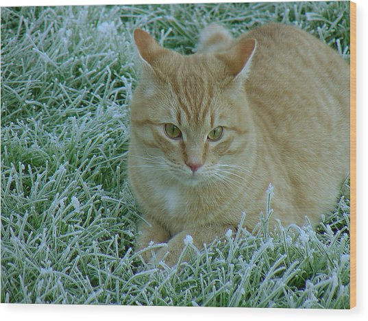 Cat In Frosty Grass Wood Print