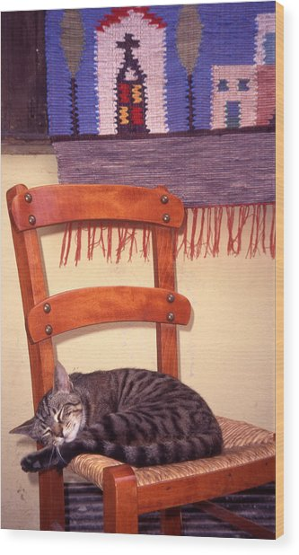 Cat Nap Wood Print by Steve Outram