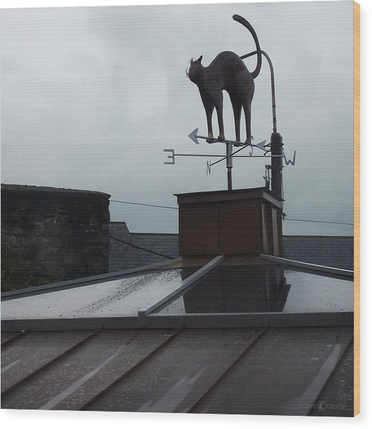 Cat On A Cool Tin Roof Wood Print