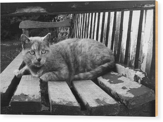 Cat On A Seat Wood Print
