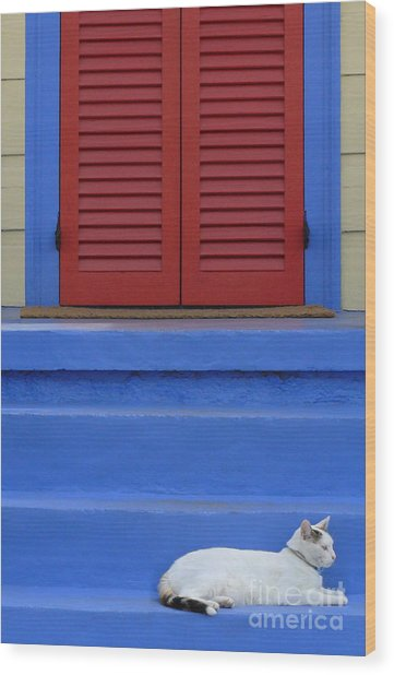 Cat On Blue Steps Wood Print