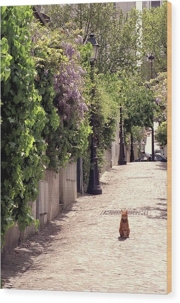 Cat On Cobblestone Wood Print