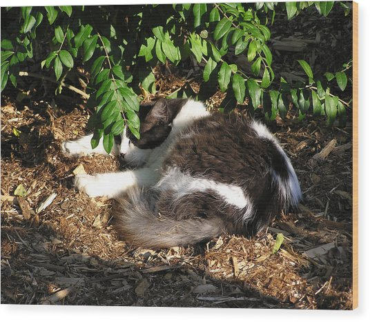 Cat Resting Under Tree Wood Print by Richard Mitchell