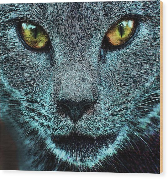 Cat With Golden Eyes Wood Print
