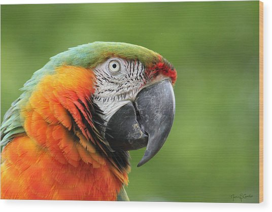 Catalina Macaw Wood Print