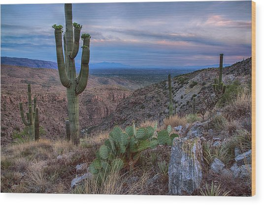 Catalina Mountains Color Sunset Wood Print