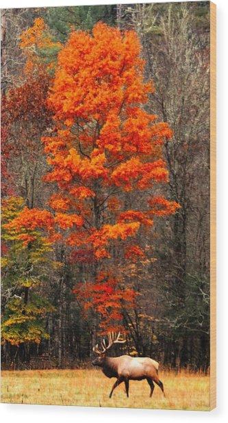 Cataloochee Color Wood Print