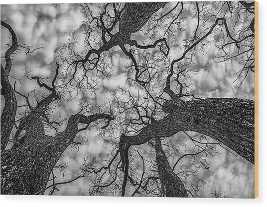 Catalpa And Altostrato Q Wood Print