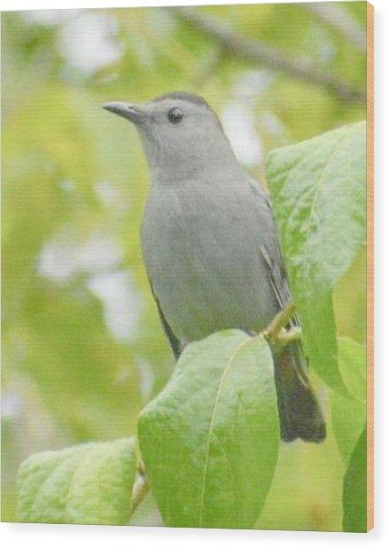 Catbird Wood Print