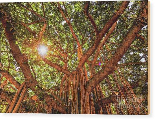 Catch A Sunbeam Under The Banyan Tree Wood Print
