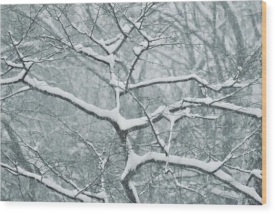 Catching The Snow Wood Print by JAMART Photography
