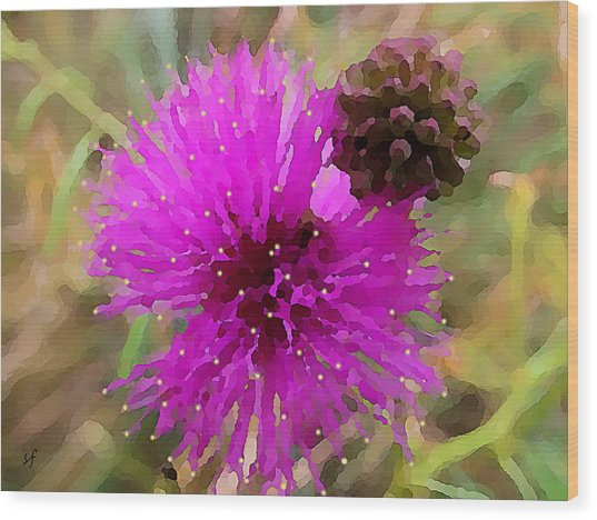 Wood Print featuring the digital art Catclaw Pink Mimosa  by Shelli Fitzpatrick