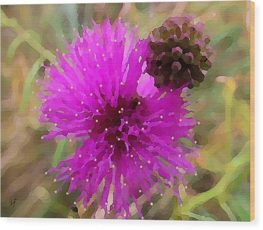 Catclaw Pink Mimosa  Wood Print