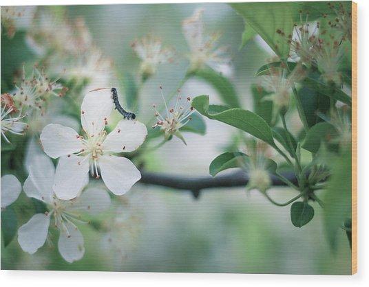 Caterpillar On A Tree Blossom Wood Print