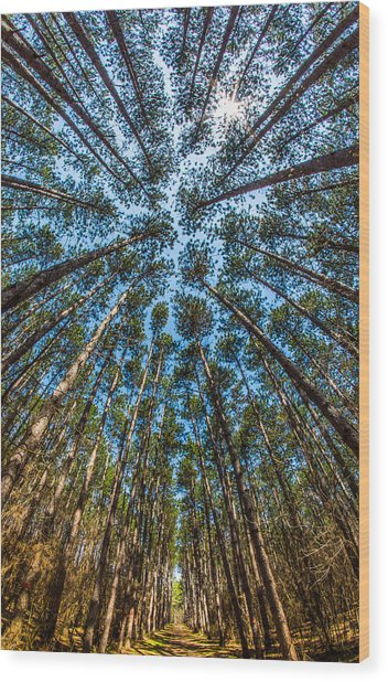 Cathedral In The Pines Wood Print