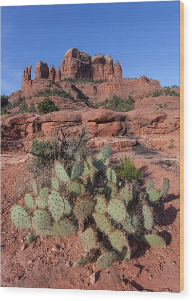 Cathedral Rock Cactus Grove Wood Print