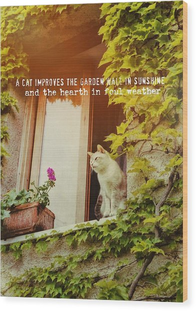 Cats Eye View Quote Wood Print by JAMART Photography