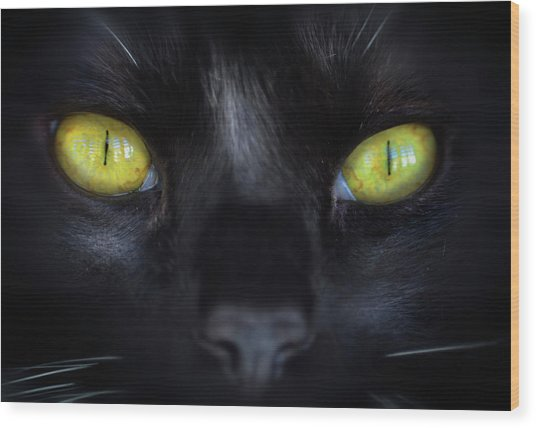 Cat's Eyes Wood Print