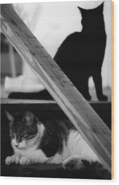 Cats Pose For Money And Fame Wood Print
