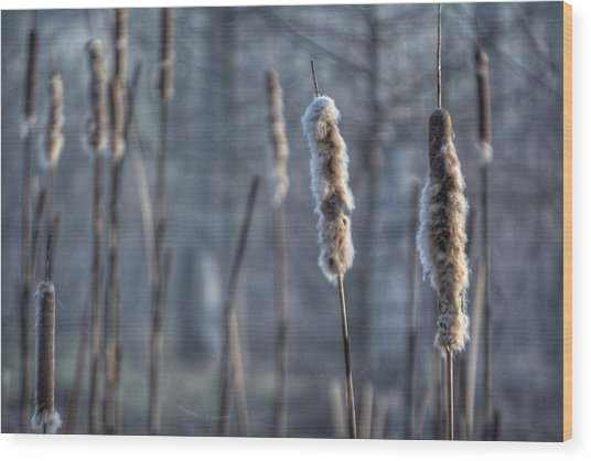 Cattails In The Winter Wood Print