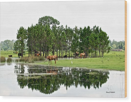 Cattle And Horse Ranch In Florida Wood Print