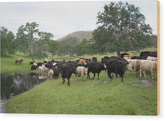 Cattle Wood Print
