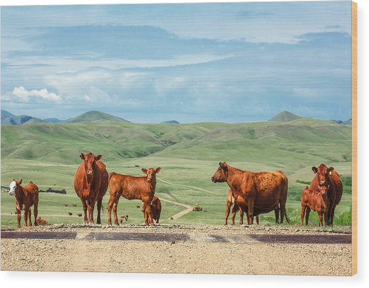 Cattle Guards Wood Print