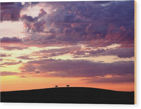 Cattle Ridge Sunset Wood Print