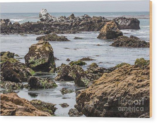 Cayucos Coast B3920 Wood Print by Stephen Parker
