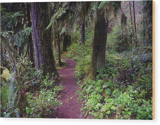 Cedar Creek Trail #3 Wood Print