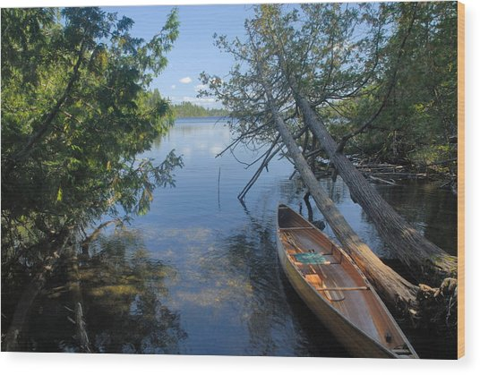 Cedar Strip Canoe And Cedars At Hanson Lake Wood Print