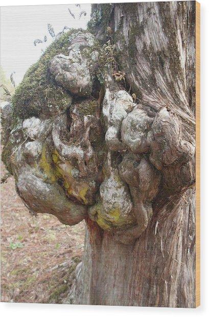 Cedar Tree Sculpture Photograph By Warren Thompson