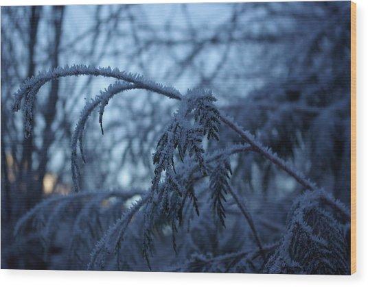 Cedars Of Ice Wood Print