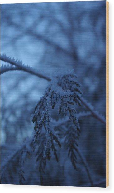 Cedars Of Ice II Wood Print