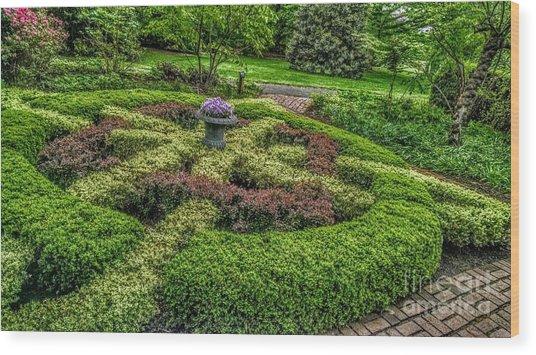 Celtic Topiary At Frelinghuysen Arboretum Wood Print