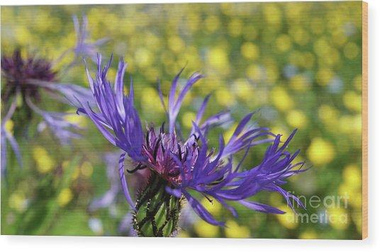 Centaurea Montana Flower Wood Print