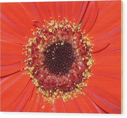 Center Seeds Wood Print